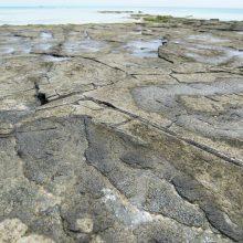 畳石(タタミイシ)